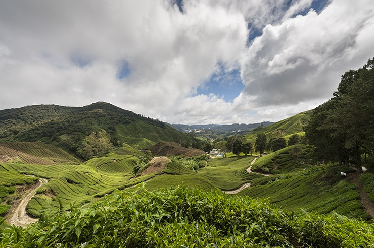Cameron Highlands Tea Hills with Road