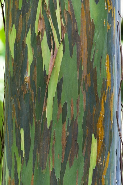 Kuala Lumpur Forest Colour Tree