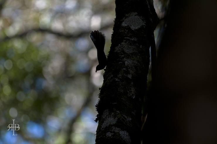 Kinabalu Bird Shadow