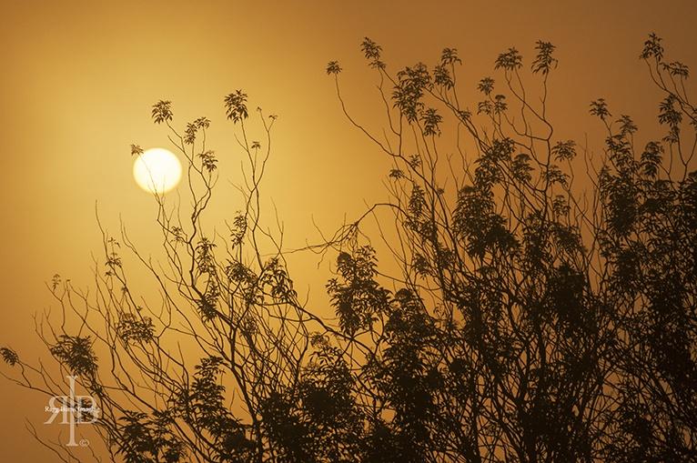 Mount Kinabalu Sunrise Fog