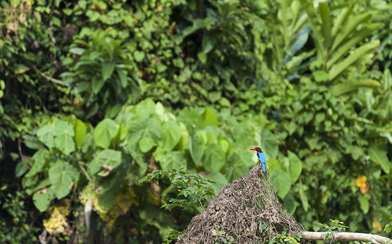 Taman Negara Kingfisher