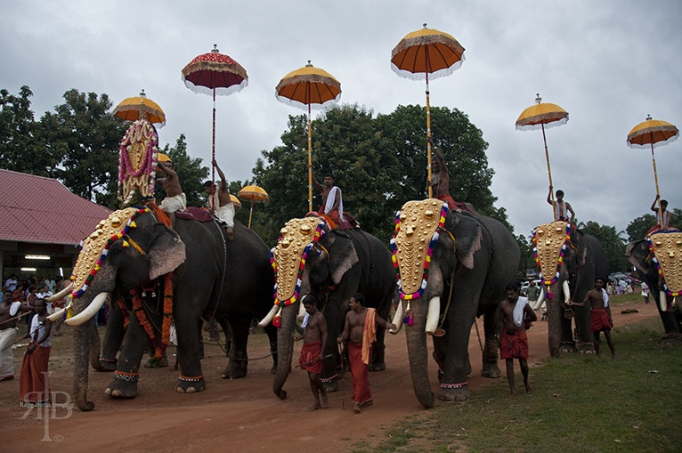 India Onam elephants and umbellas