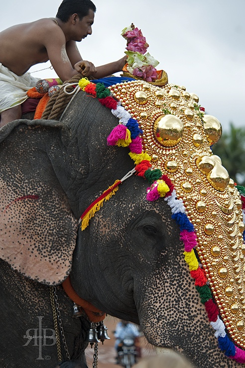 India Onam man and elephant