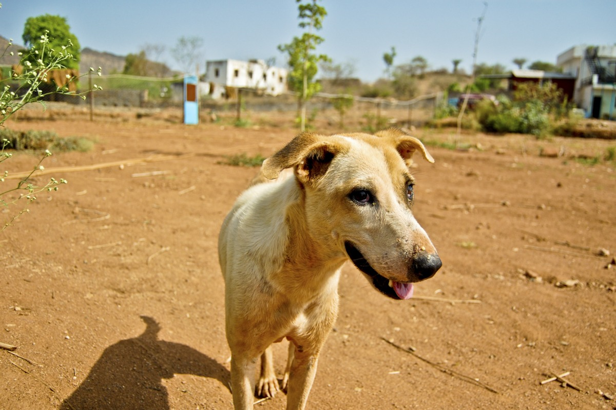 dog outside animal aid