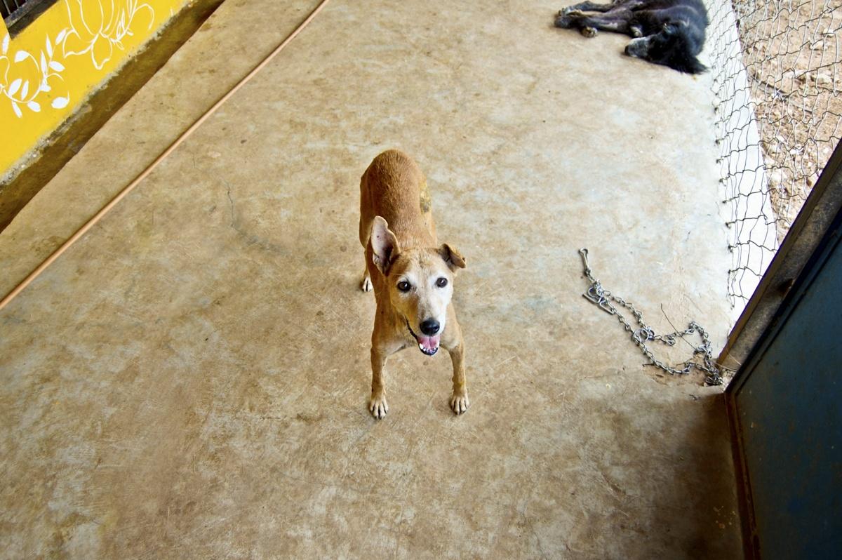 Puppy animal aid