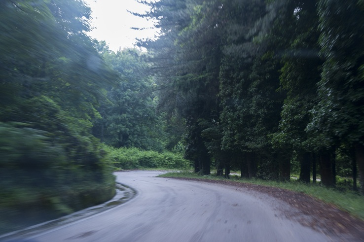 Foresta Umbra Blurry Forest Road
