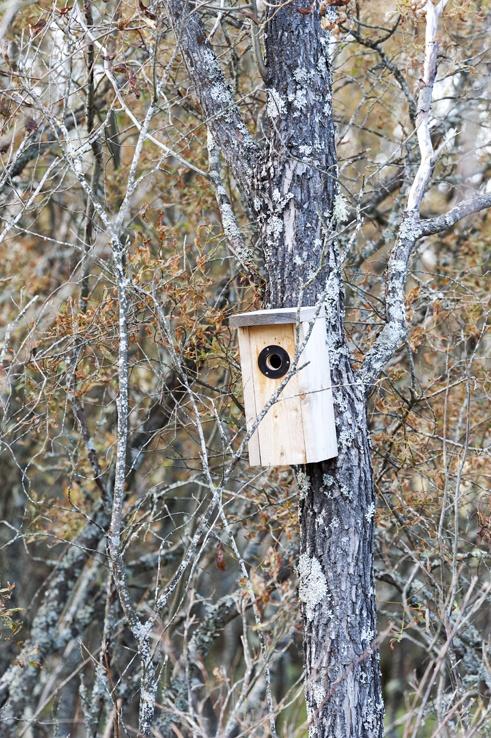 Birdwatching in Liminka Bay Nest Box