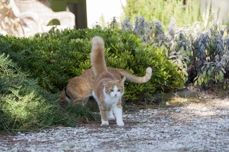 grumpy ginger cat