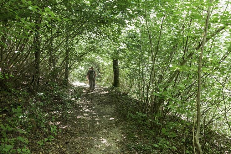 romagna apennines forest