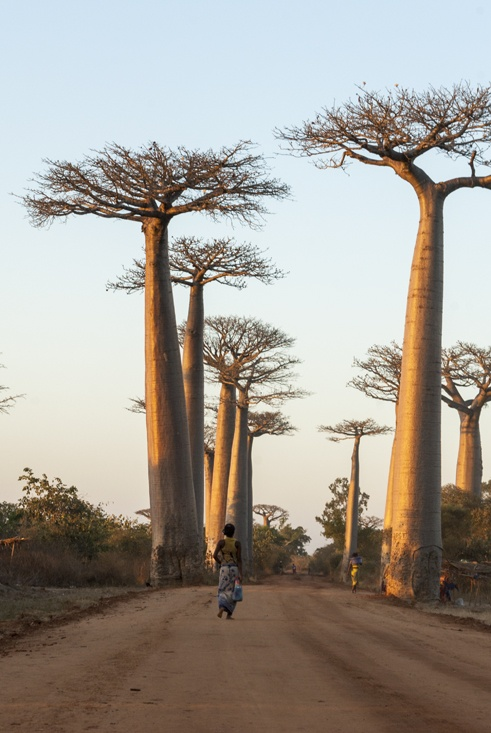 Madagascar Baobabs Lady walking down the Avenue