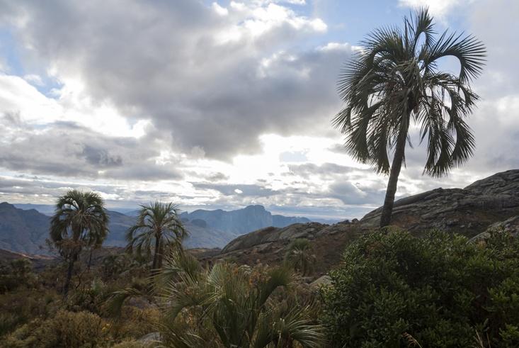 Andringitra national park palms