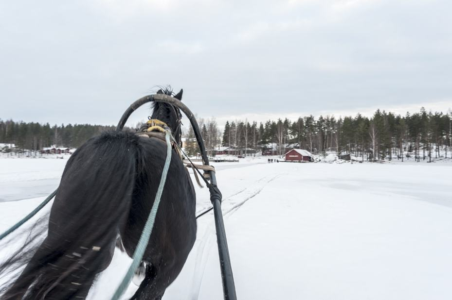 Behind the Horse sled mikkeli finland