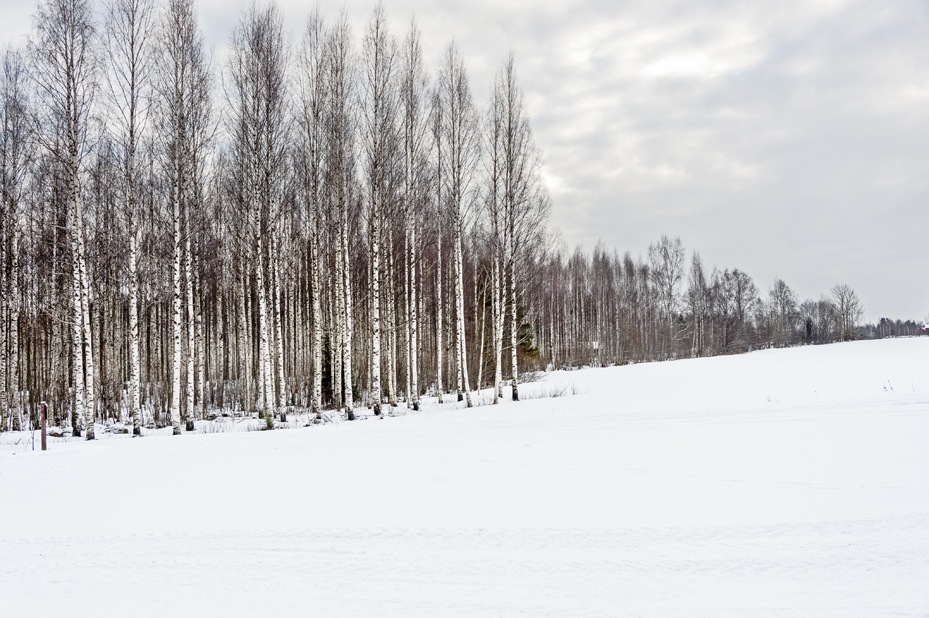 Frozen snow forest mikkeli winter