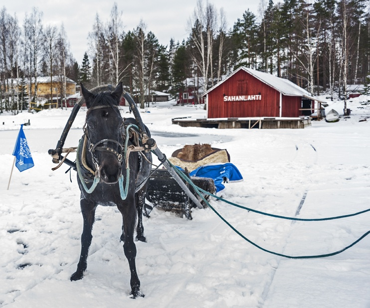 Horse sled mikkeli frozen lake