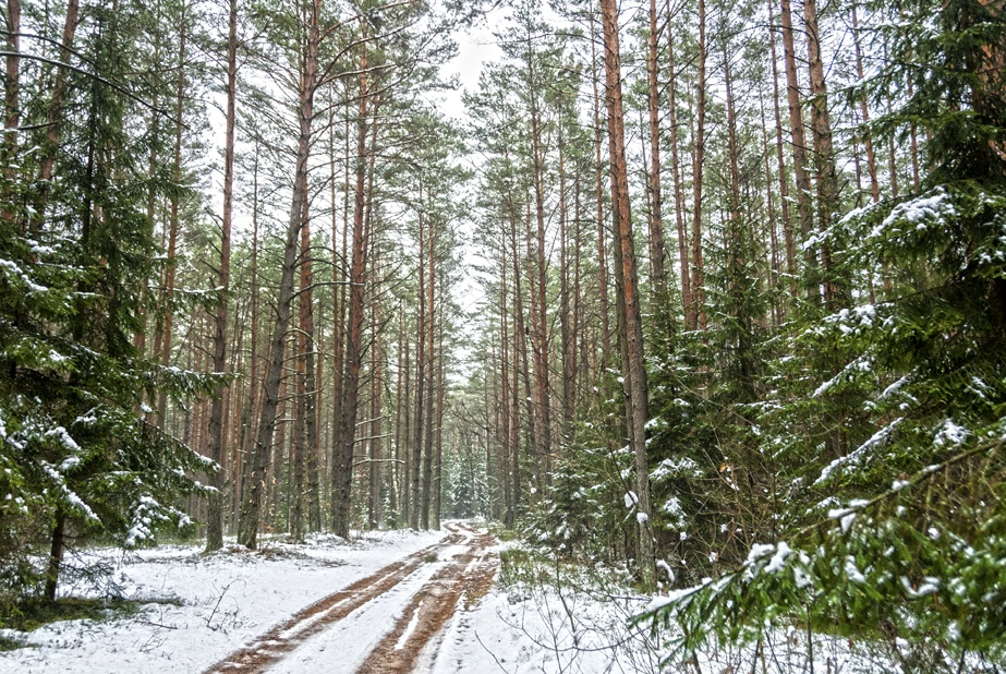 lithuania snowy forest