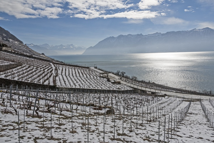 Lavaux vineyards lake