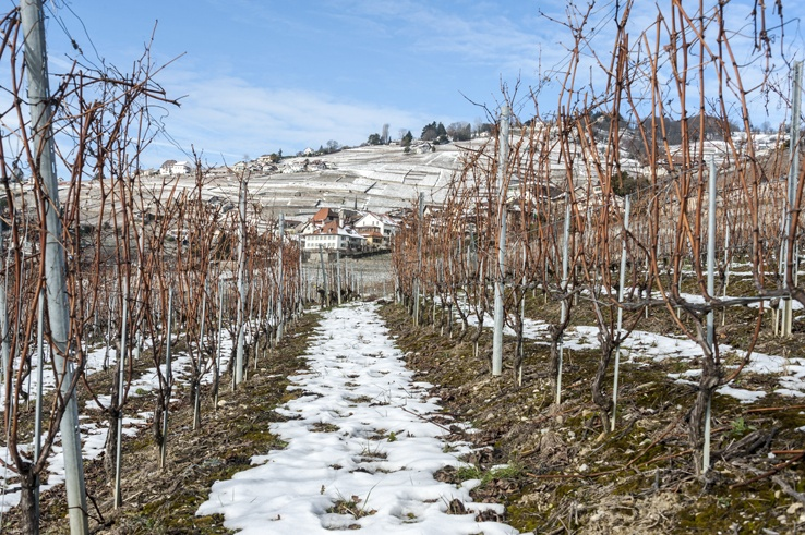 vineyards lavaux snow
