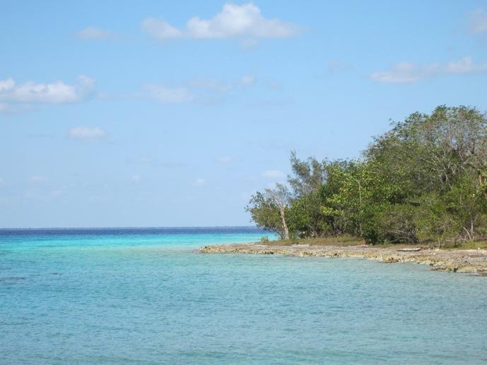 mangrove beach cuba