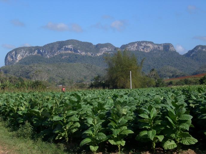 vinales landscape cuba