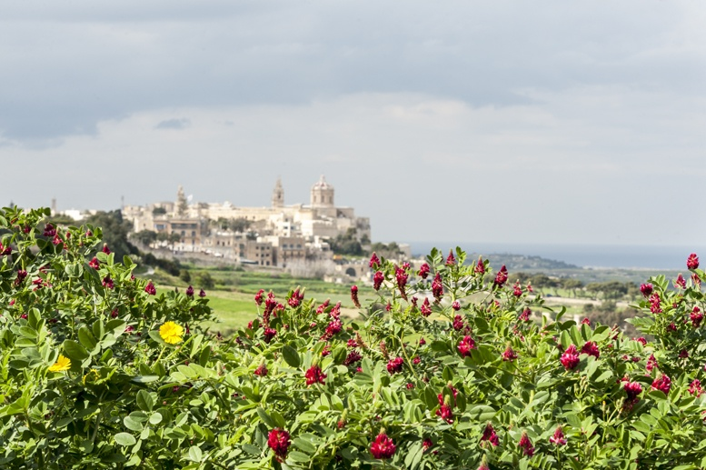 malta mdina view