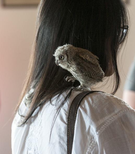 baby tawny owl pyrenees zoo