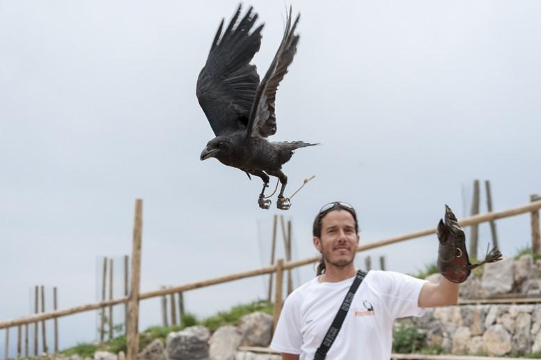 crow flying eloi zoo pirineu
