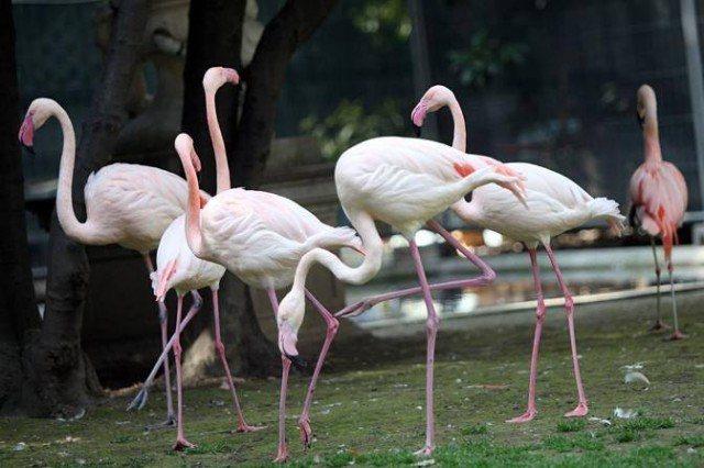 pink flamingos Milan