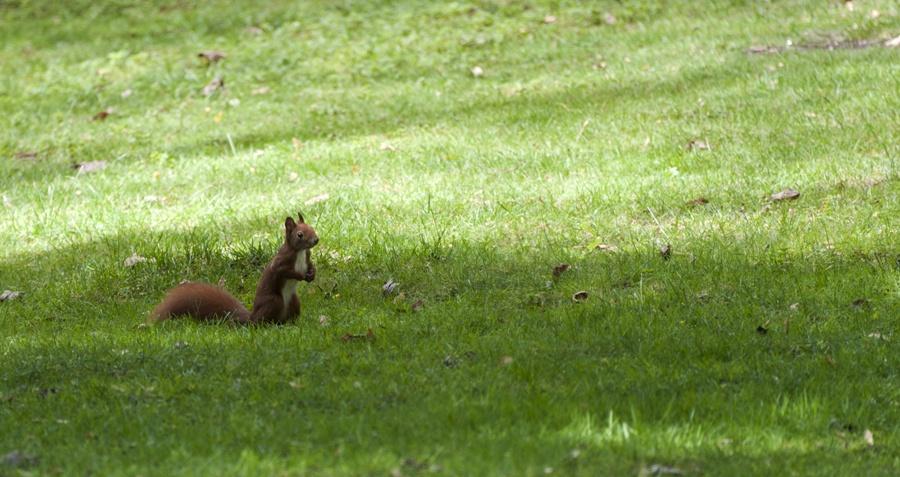 hansaviertel squirrel berlin