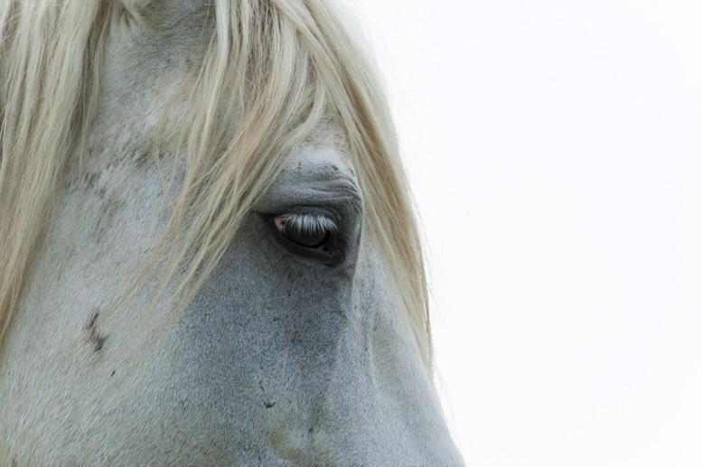 camargue horse eye lido estensi