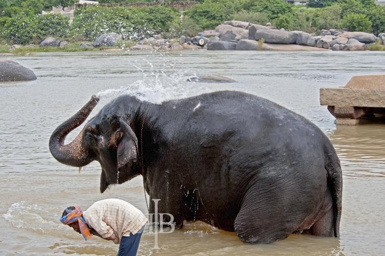 Hampi elephant wash spray