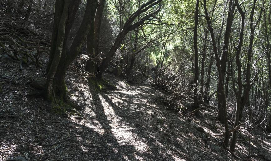 hiking ogliastra woods