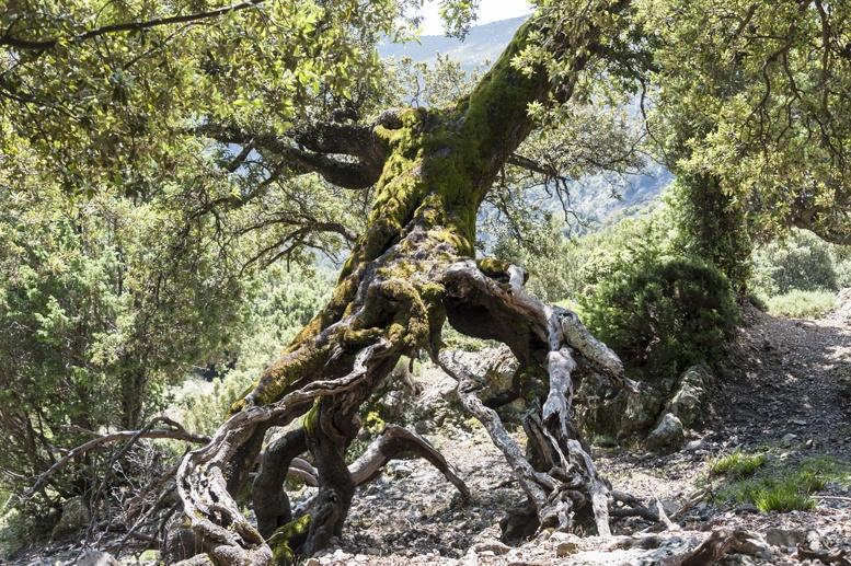 tree roots sardinia