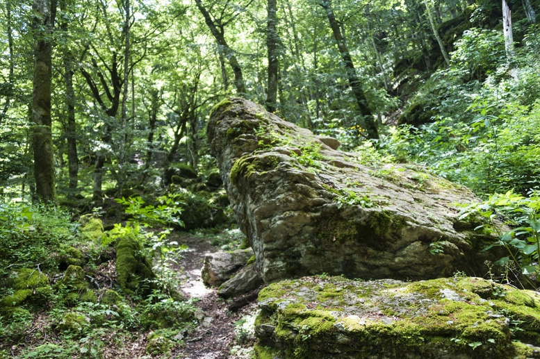 la verna forest rocks