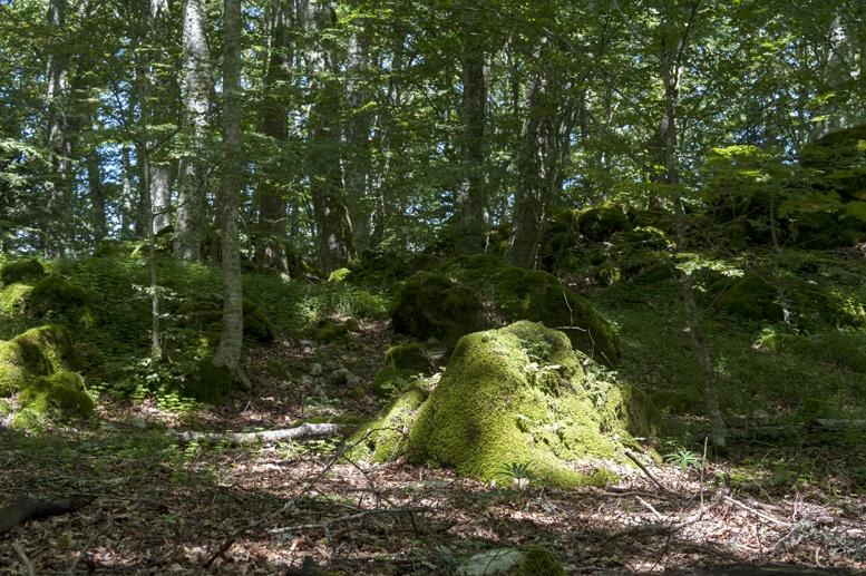la verna forest trees boulders