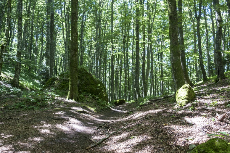 la verna sanctuary path