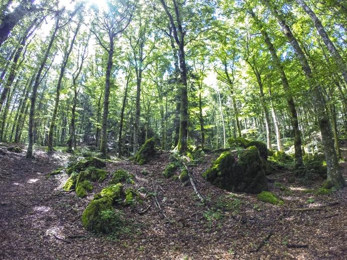 la verna foreste sacre