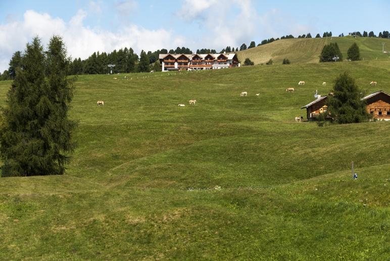 alpine meadow summer