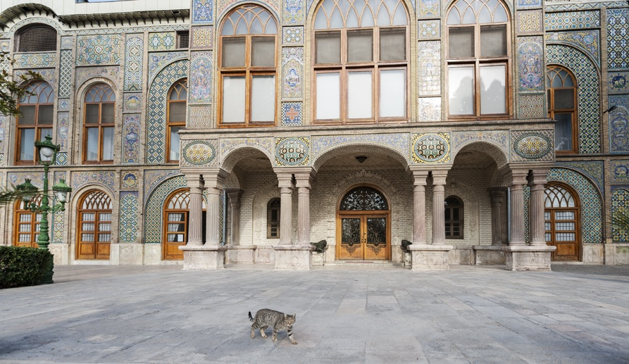 tehran gollestan palace outside cat