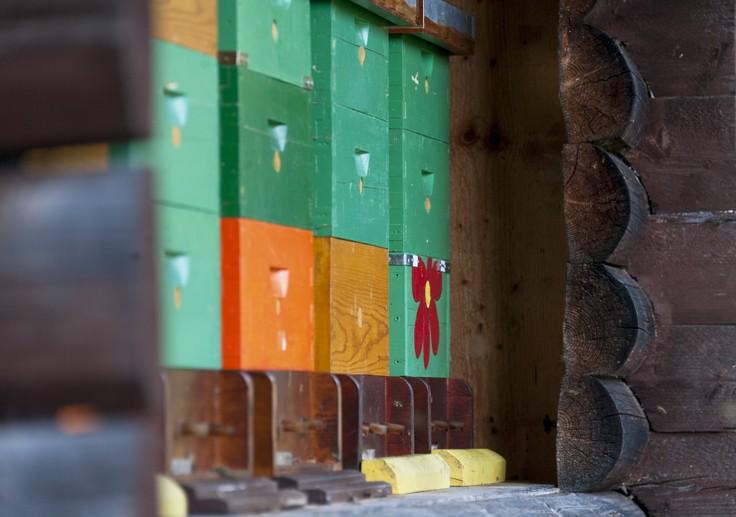 slovenia beekeper box