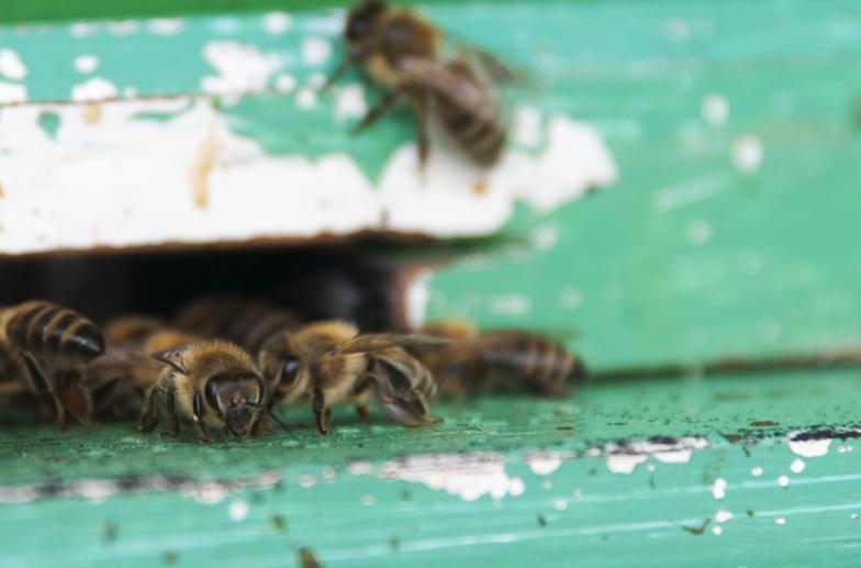 slovenia beekeper bees