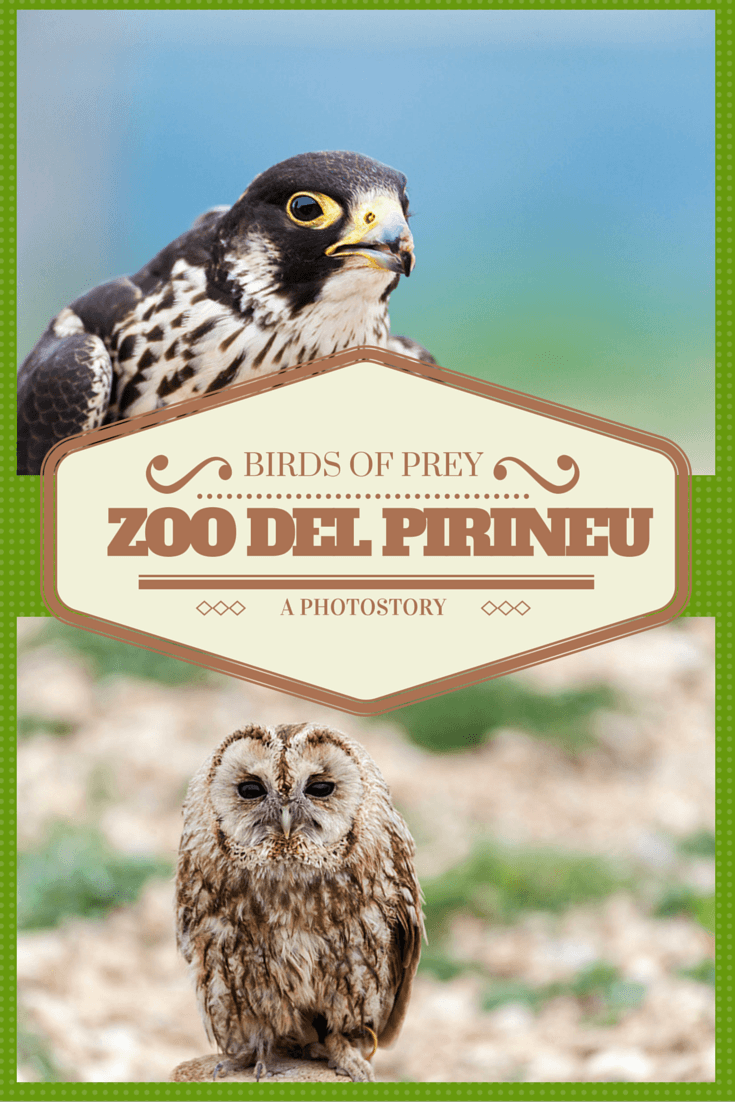 zoo del pirineu pin