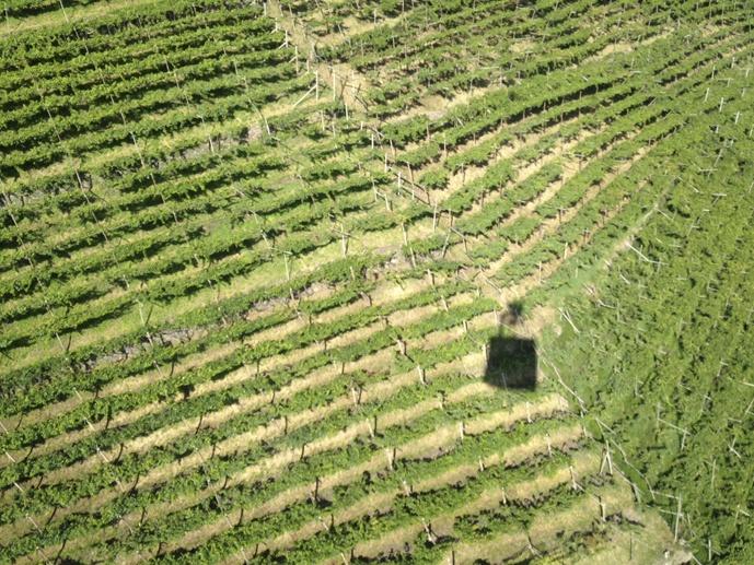 renon cablecar vines