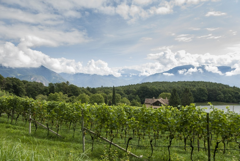 south tyrol wineries lake