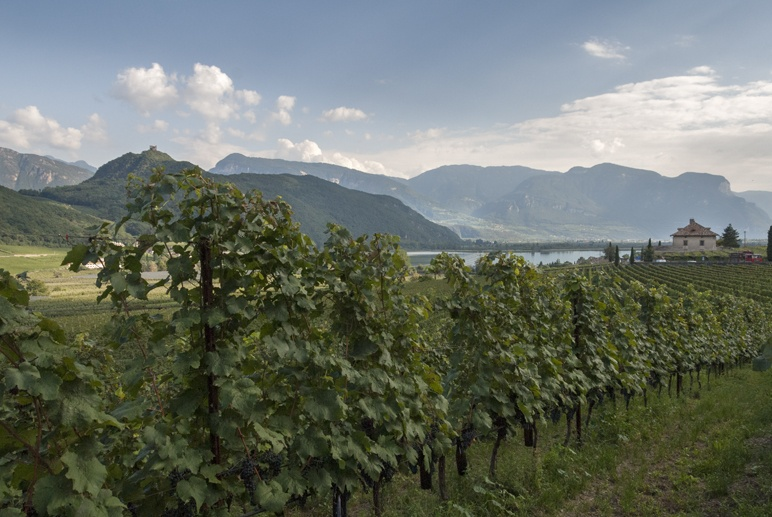 winery caldaro lake south tyrol