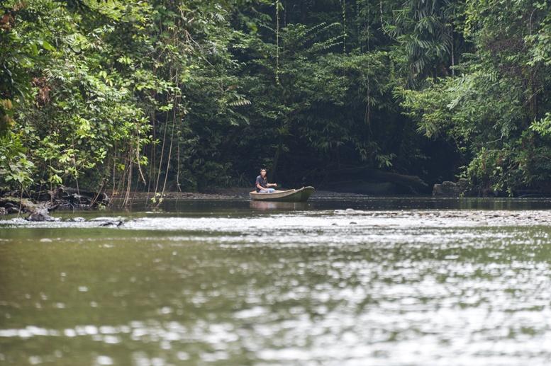 river jungle gunung mulu malaysia