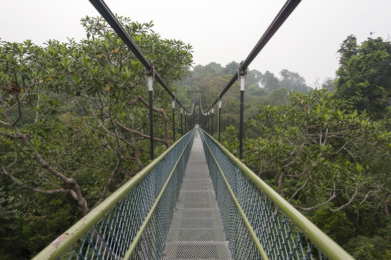macritchie reservoir treetop walk