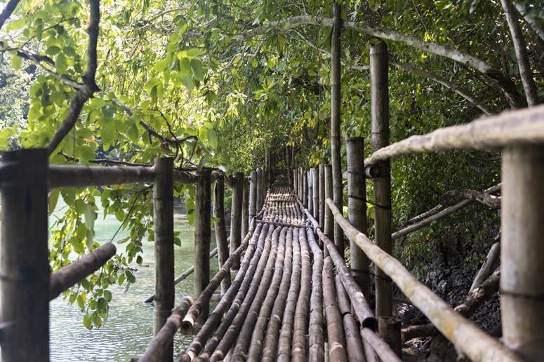 moray eel lagoon walkway danjugan philippines