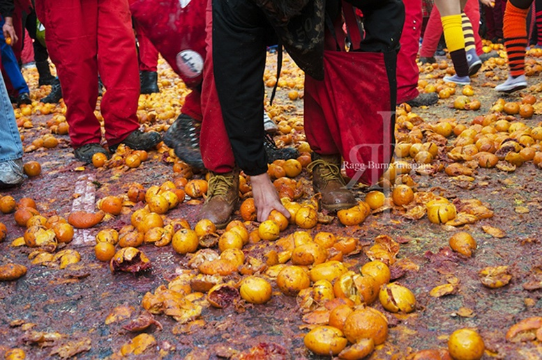 ivrea carnival oranges picking