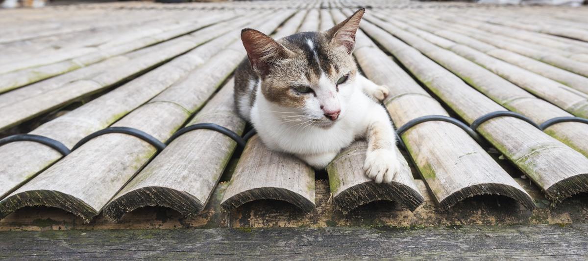 cat longhouse annah rais