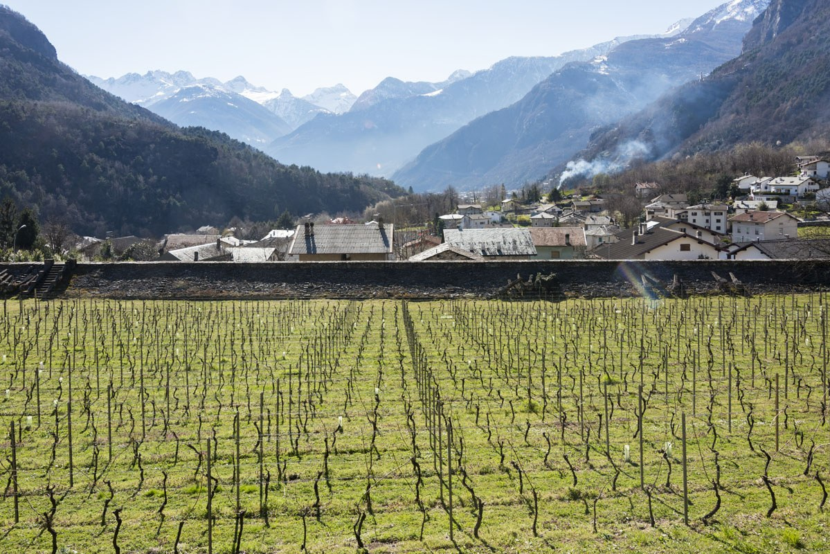 palazzo vertemate franchi vineyard